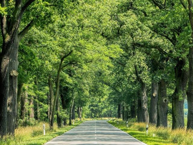 Die grüne Gefahr am Straßenrand