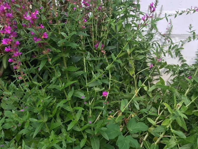 Unkraut vernichten: Lästige Beipflanzen wirkungsvoll aus dem Garten entfernen