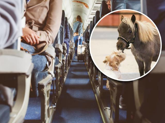 Kein Scherz!: In den USA dürfen auch Pferde mit in die Flugzeug-Kabine