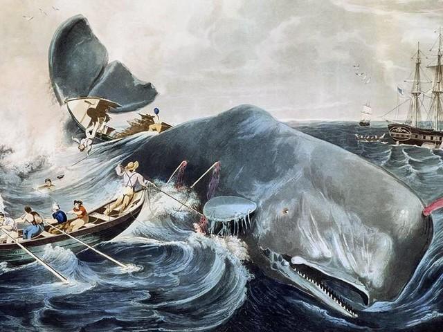 Moby Dick wird 170: Ein Wal schreibt Geschichte