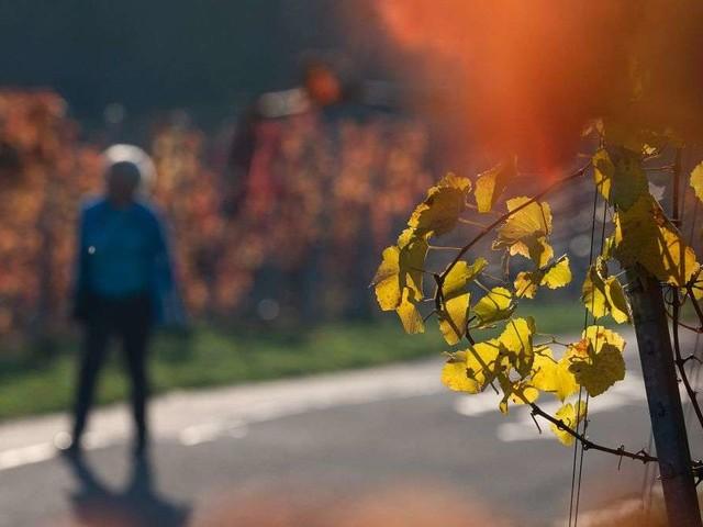 Herbstwetter am Wochenende - Temperaturen sinken weiter