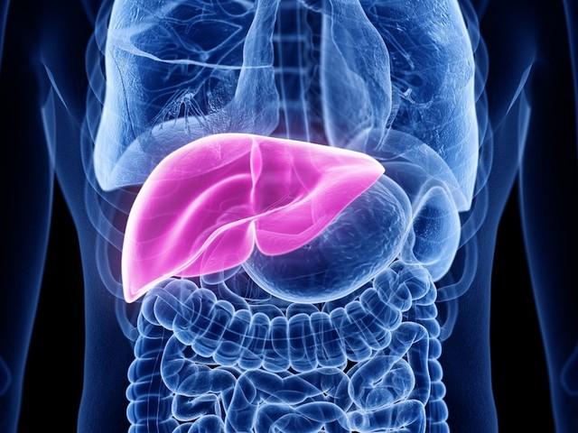 FOCUS-Online-Gesundheitscheck - Ist Ihre Leber krank? Mit vier kurzen Checks finden Sie es heraus