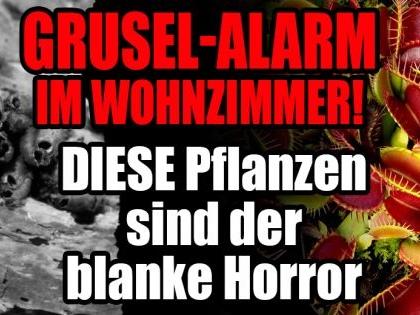 Spukende Zimmerpflanzen: Grusel-Alarm! DIESE Pflanzen sind der blanke Horror