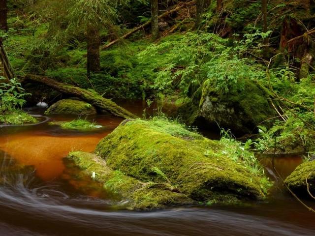 Bärentrail, Waldviertel: Die Spur der Steine und des Wassers