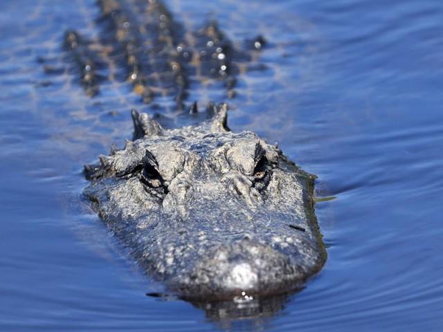 Mann in Florida nach Sturz mit Fahrrad von Alligator attackiert