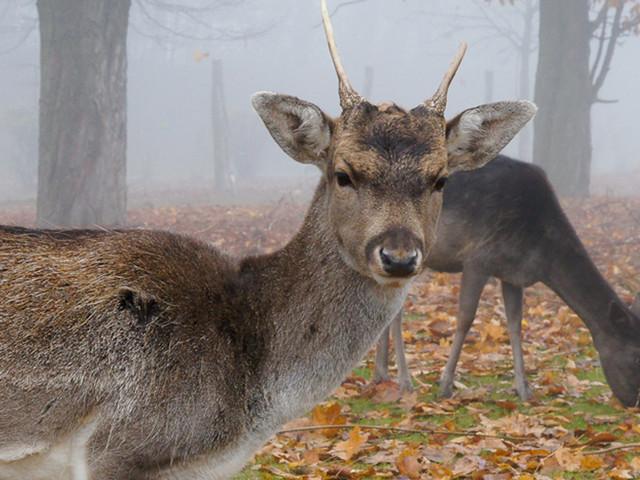 Elbauenpark lädt in Winterferien 2019 zur Damwildfütterung bei freiem Eintritt