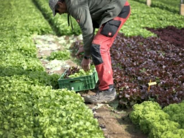 Bundestag beschließt Gesetz gegen unfaire Praktiken des Lebensmittelhandels