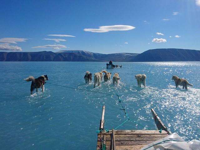 Klimawandel: Grönlands Eis steht unter Wasser