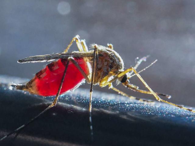 Dieses Jahr gibt es besonders viele Stechmücken in Deutschland
