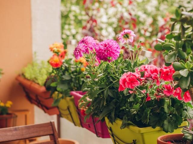 Wie Sie Ihre Balkonblumen sicher durch die Urlaubszeit bringen