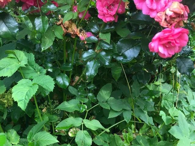 Unkraut entfernen, aber richtig: Diese Methoden helfen langfristig gegen lästige Beipflanzen
