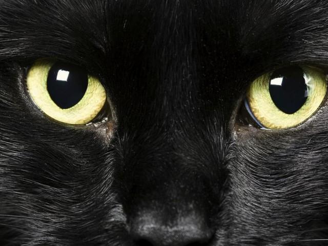 """Mehr als fünf Jahre Haft für """"Katzenmörder von Brighton"""""""