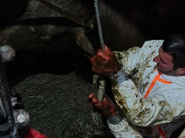 Kuh Elmira aus drei Meter tiefer Jauchegrube gerettet