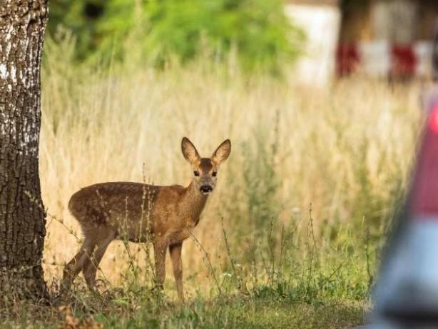 Herbst: Wo die Gefahr für Wildwechsel am größten ist
