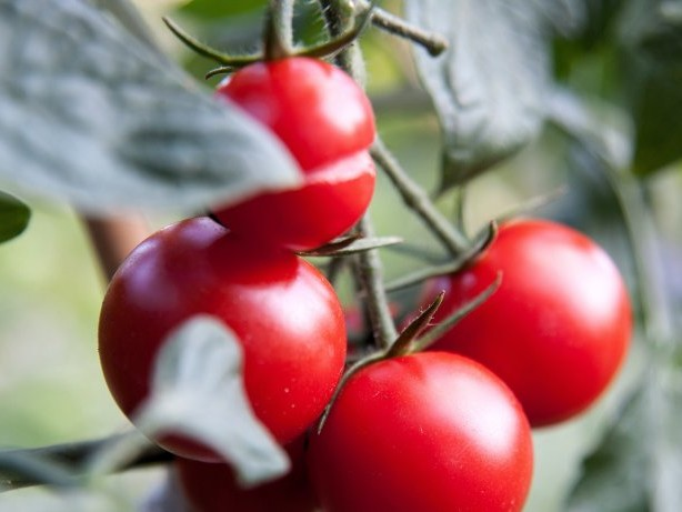 Aufbewahrung: Diese Lebensmittel sollte man nicht im Kühlschrank lagern