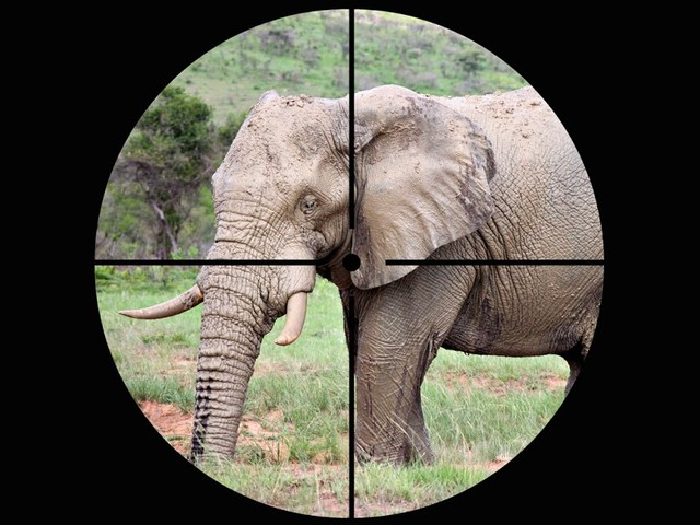 Sonntagsfrage: Was halten Sie davon, dass Trump die Einfuhr von Elefanten-Trophäen wieder erlaubt hat?