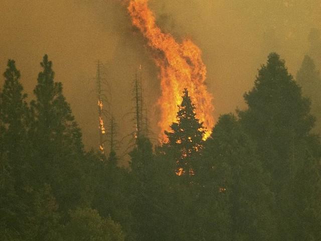 Größter Baum der Welt von Waldbrand in Kalifornien bedroht