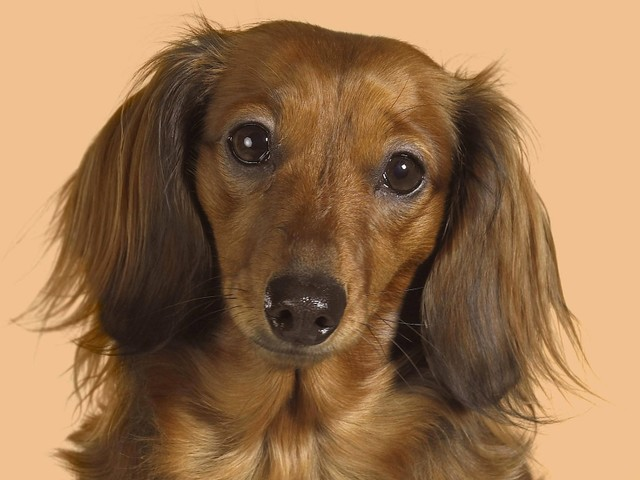Auch Hund können in Psychotherapie.