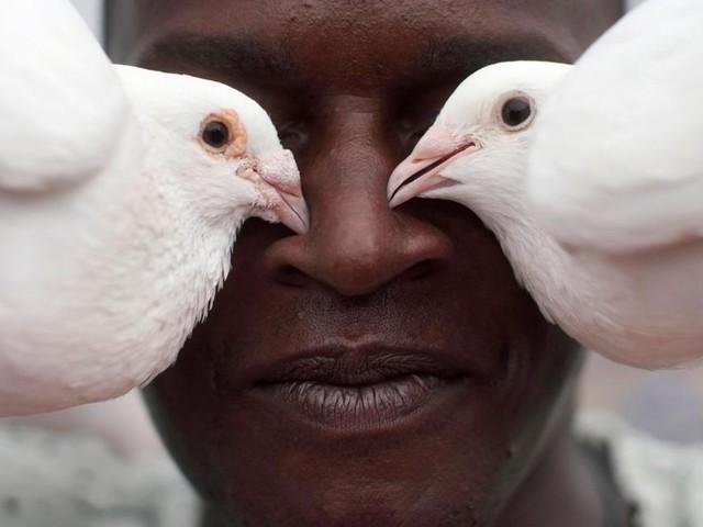 Simbabwe statt Südafrika: Renntauben fliegen wieder um die Wette
