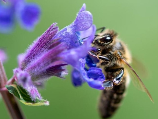 Artenvielfalt: «Wir erodieren gerade unsere Lebensgrundlage»