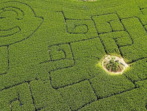 Freizeit: Maislabyrinthe in der Region – von Kevelaer bis zum Edersee