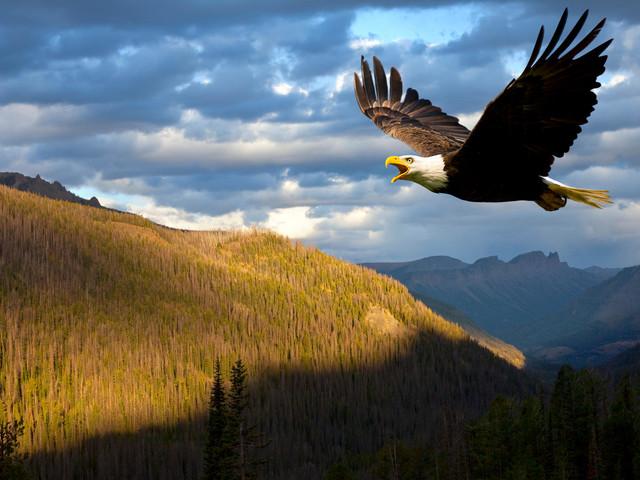 Voll unsympathisch, aber weise - Was wir von Adlern lernen können