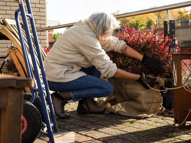 Zehn Dinge, die Sie jetzt im Garten machen sollten