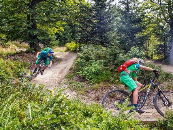 Wanderer vs. Mountainbiker: Nägel und Zoff – wem gehört der Waldweg?