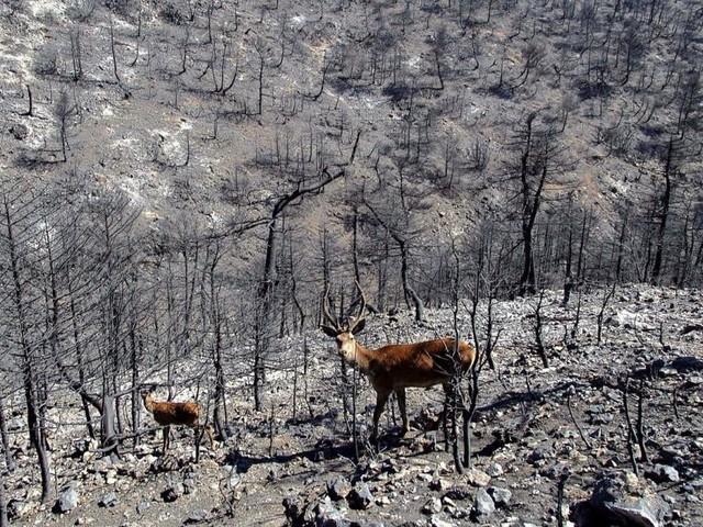 Feuer in Griechenland haben Tausende Bienenstöcke zerstört