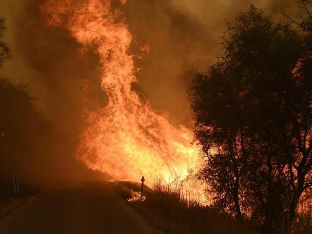 Waldbrand versehentlich ausgelöst? Ehepaar wegen fahrlässiger Tötung angeklagt