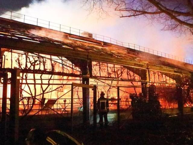 Himmelslaternen warenUrsache: Brand in Affenhaus: Beschuldigte lehnen Geldstrafen ab