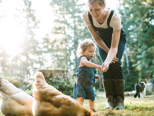 Tierische Mitbewohner: Huhn, Schwein, Ziege oder Schaf im Garten
