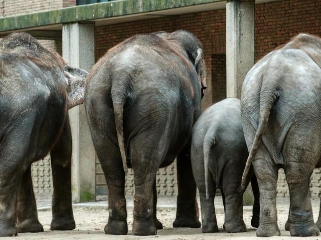 Spannung vor Elefantenrunde: Wer überzeugt eine Woche vor der Wahl?