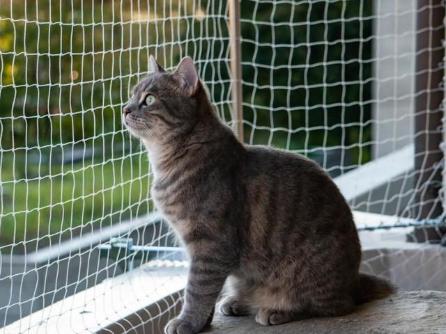"""Tiercoach: """"Katzen haben nur sprichwörtlich sieben Leben"""""""