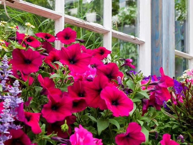 Fehler beim Balkonkasten-Bepflanzen: Das machen viele falsch