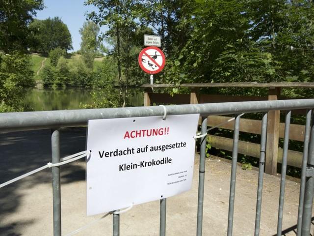 Nach Krokodilalarm an Kirchheimer Badeseen: Krokodil-Expertin der Wilhelma eingeschaltet
