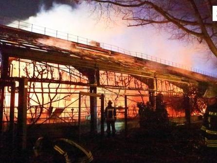 Brand in Affenhaus: Beschuldigte lehnen Geldstrafen ab