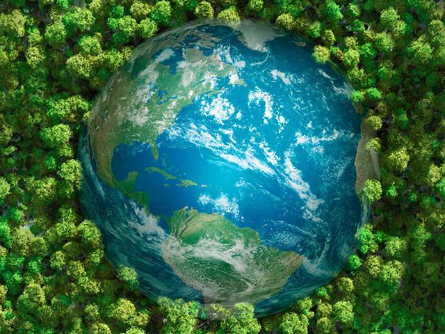 Pufferwirkung der Vegetation sinkt