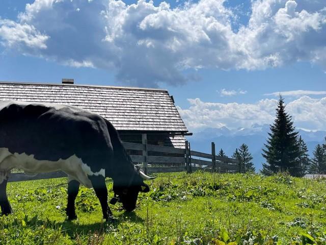 120 Jahre alte Almhütte in Tirol abgebrannt