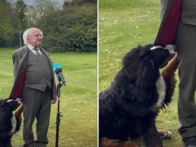 Abgeschleckt im TV-Interview: Hund des irischen Präsidenten stiehlt Herrchen die Show