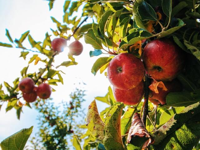 Äpfel stapeln