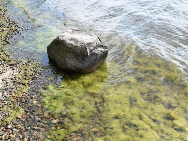 Gefährlicher Glibber: Fadenalgen bedrohen klare Seen