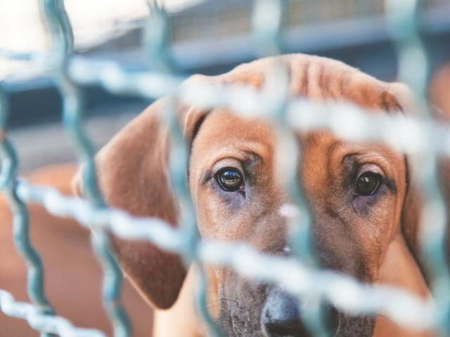 Nach dem Hundeboom: Das Schicksal der Pandemiehunde