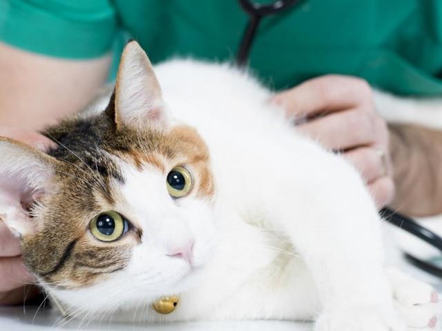 Tiercoach: Was Katzen zum Husten bringen kann