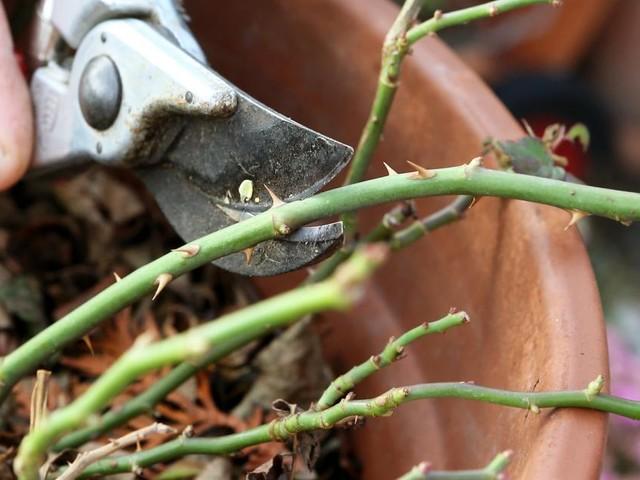 Pflanzen-Rückschnitt: Jetzt ist die Zeit zum Zwicken