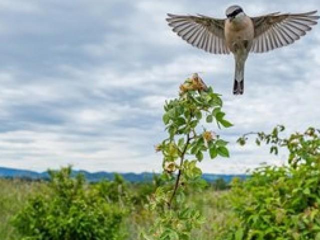 City Nature Challenge: Tiere und Pflanzen in St. Pölten finden
