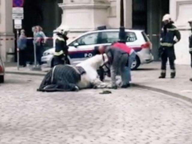 Virales Video von sterbendem Fiaker-Pferd am Michaelerplatz