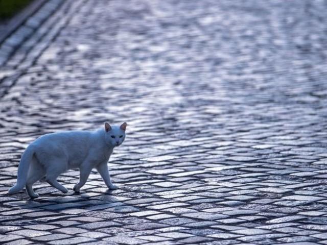 Tierrechte: Großbritannien verankert Gefühle von Wirbeltieren imGesetz