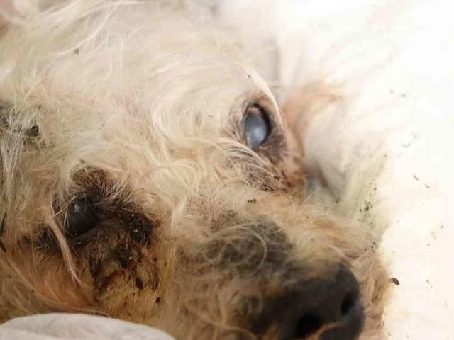 Tier in Mülheim ins Wasser geworfen: Polizei sucht mit Fotos nach Hunde-Quäler