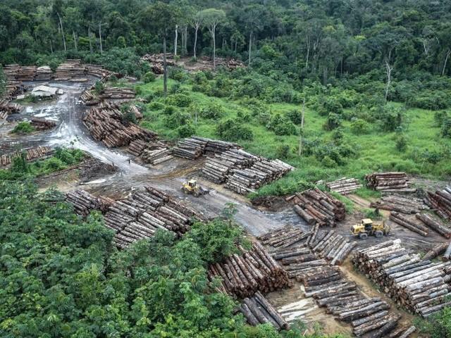 Rindfleisch, Soja, Holz: Die Milliardengeschäfte mit Brasiliens Ressourcen